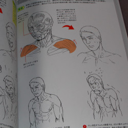 How to Draw Muscles - The Basics