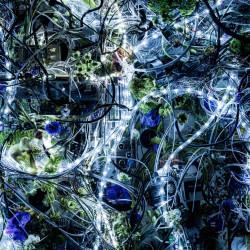 Aimer / ninelie EP - Regular Edition
